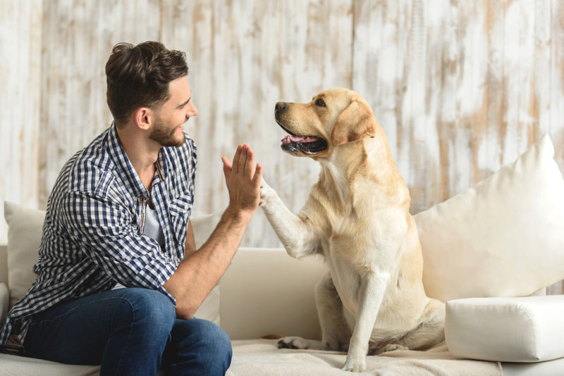 Tips for Improving IAQ When Sharing Your Home With Pets